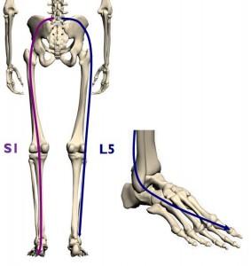 Douleur sciatique ostéopathe saint maur